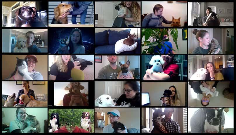 WFH All Hands Pets